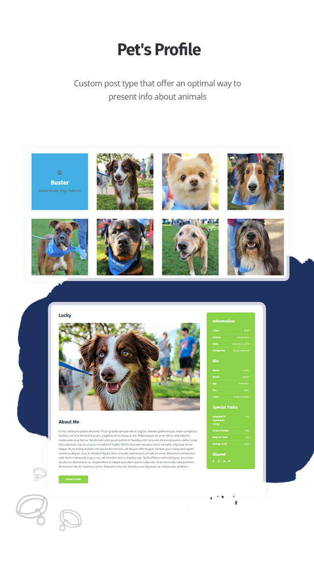 themes de wordpress clinica veterinaria
