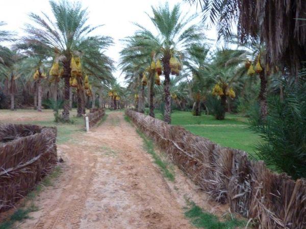 КсарГилан фото Тунис 10 фотографий КсарГилана