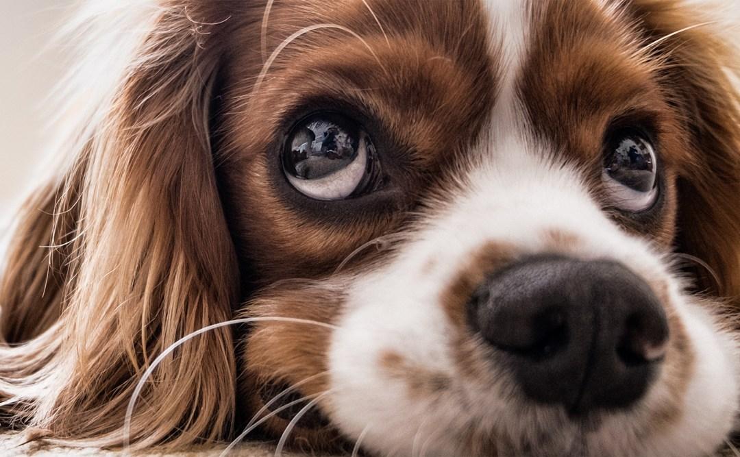 Dog Food Myths – No.3