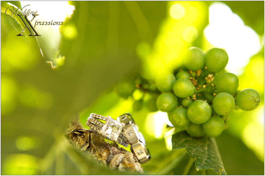 wedding rings on a vine