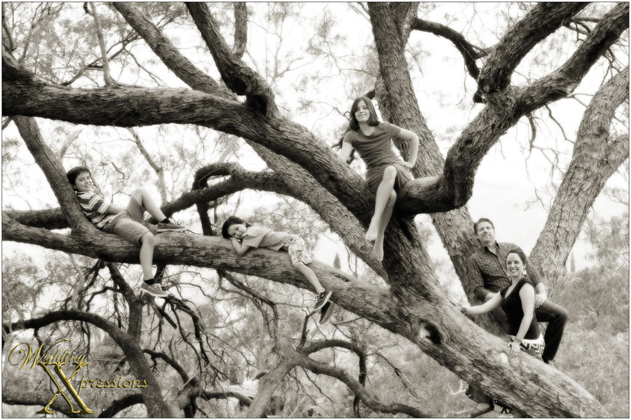 Awesome family portrait on tree