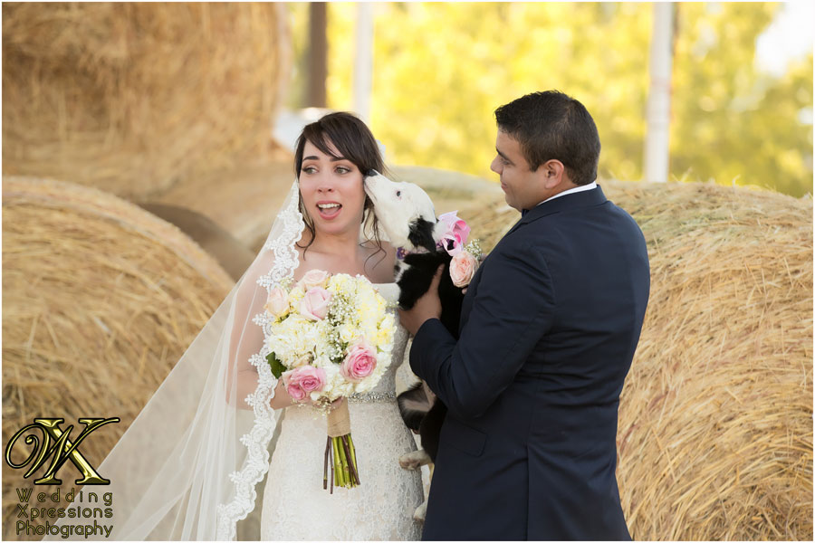 puppy love during El Paso ranch wedding.
