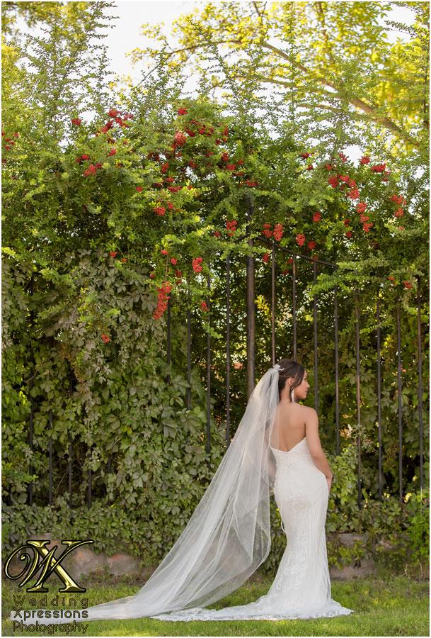 Posh Bridal dress in El Paso wedding