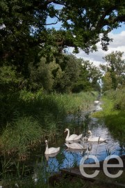Ted Ellis Nature Reserve and the Wheatfen & Deep Waters Broads