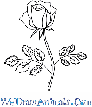 How To You Draw A Rose How To
