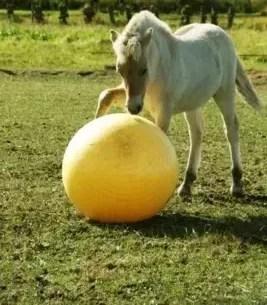 Paarden Voetbal Maximus