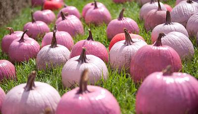Pink Pumpkins #BreastCancerAwareness #BreastCancer