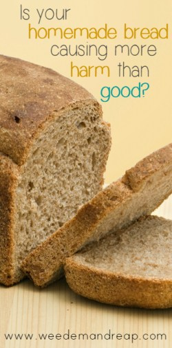 Is Your Homemade Bread Causing More Harm Than Good? || Weed 'Em and Reap