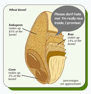 diagram of internal layers of a wheat kernal with imposed speech bubble