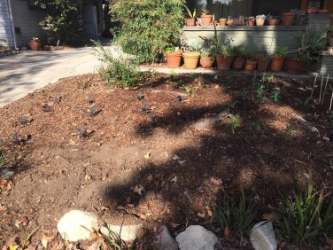 Planted (starting from middle left and going around) kale, Swiss chard, green onions, lettuce, artichokes in the middle,1/4/16)