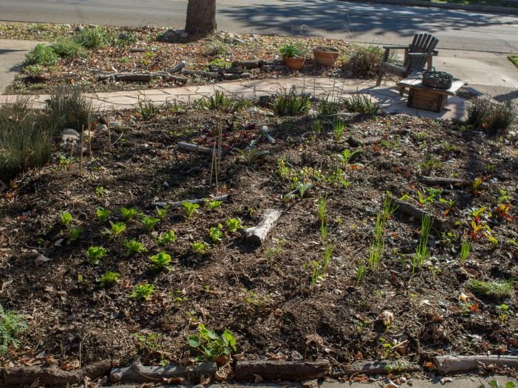Veg garden, one month old