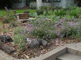 Front yard garden, 3/4/16)