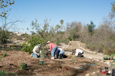Volunteers plant milkweed and nectar plants for monarch butterflies.