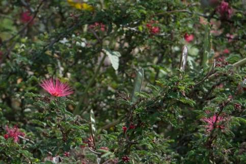 Prisk Native Garden