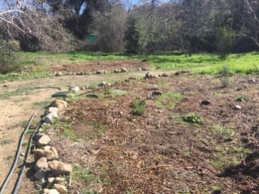 Watering new butterfly garden.