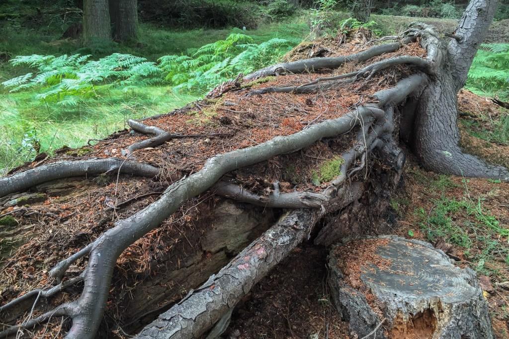 Decomposing tree trunk.