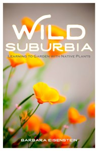 Wild Suburbia - Learning to garden with native plants