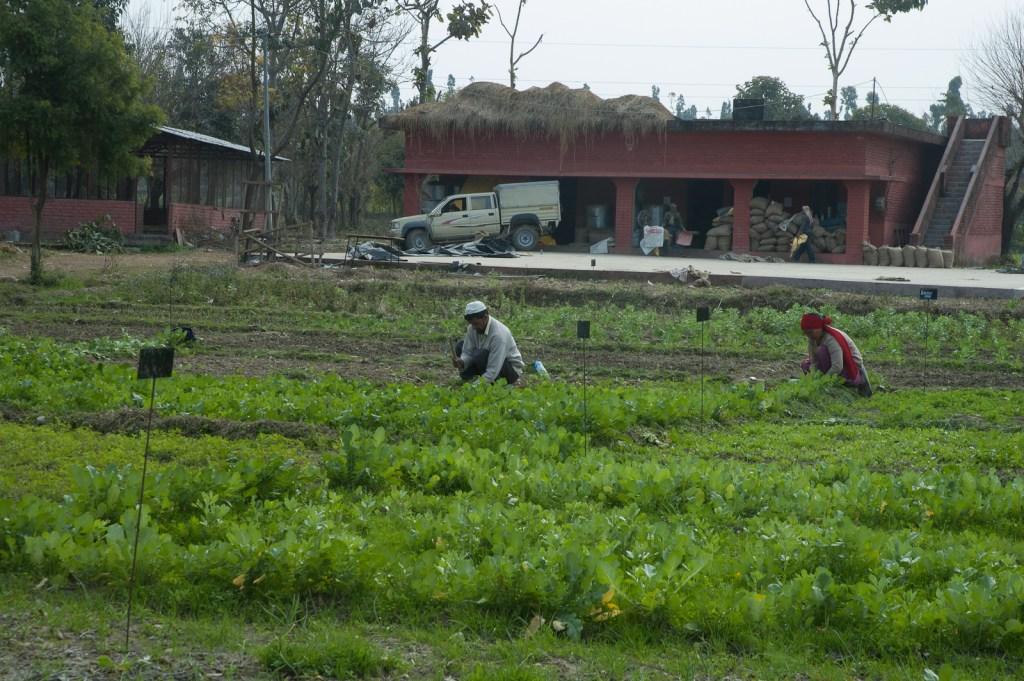 Navdanya Farm