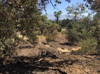 burn area in nature park