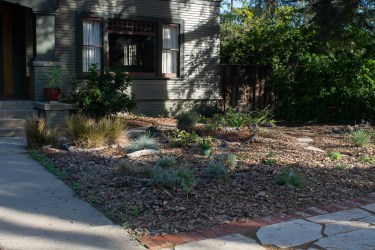 Added David's Choice sagebrush, La Luna globemallow, and other plants on east side of front
