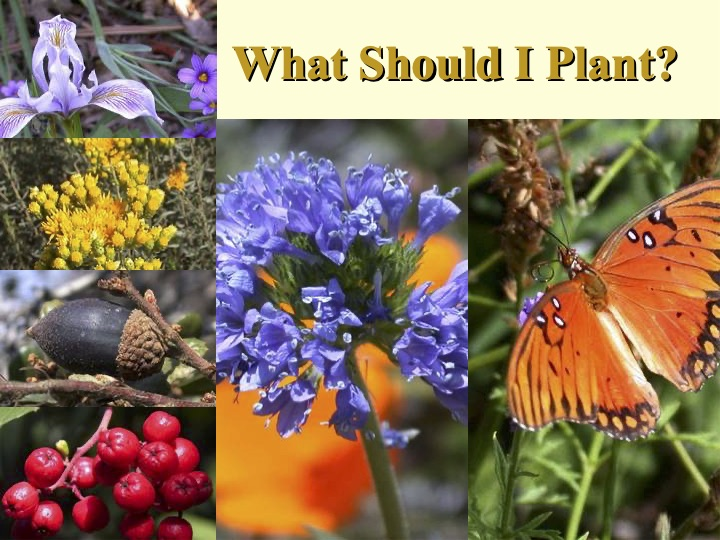 What to Plant in a Native Garden