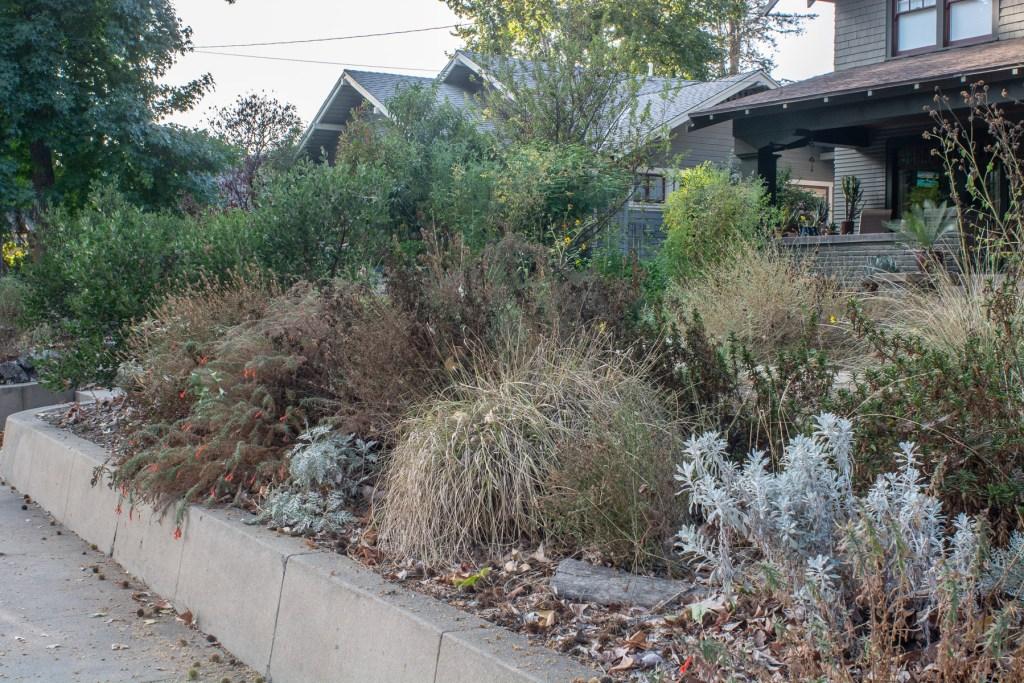 Plants go dormant in border garden
