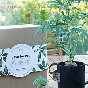 grow kit australia