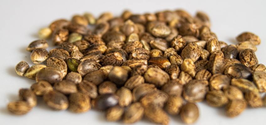oz seeds cannabis seedbanks list - local/domestic