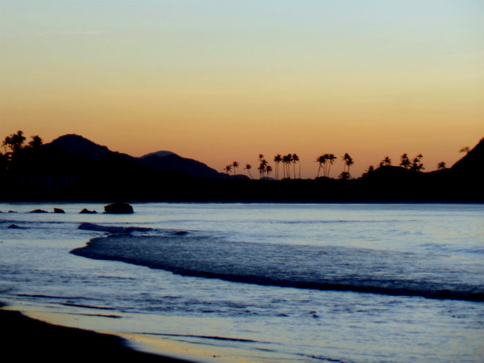 Napcan sunset palm trees edit