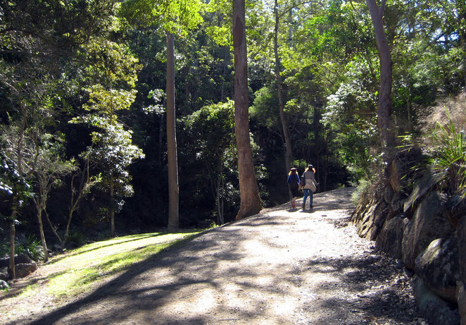 There are plenty of trails in Mt Coot-tha to walk or run