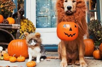 halloween-costumes-dog