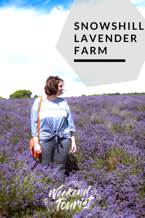 Cotswold Lavender Farm at Snowshill Manor