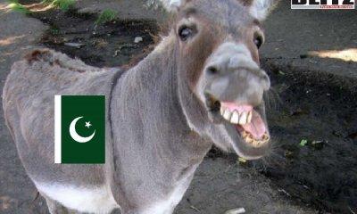 Pakistan, China, Gelatin, Donkey
