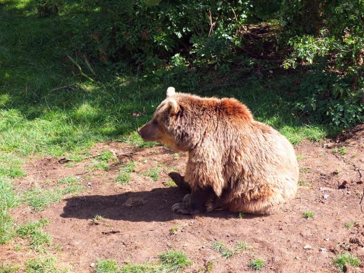ZSL-bear