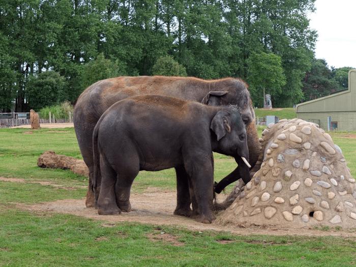 ZSL-elephants-1
