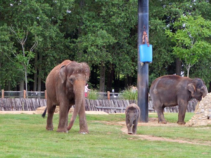 ZSL-elephants