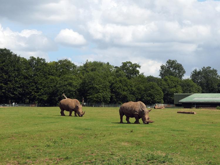 ZSL-rhino