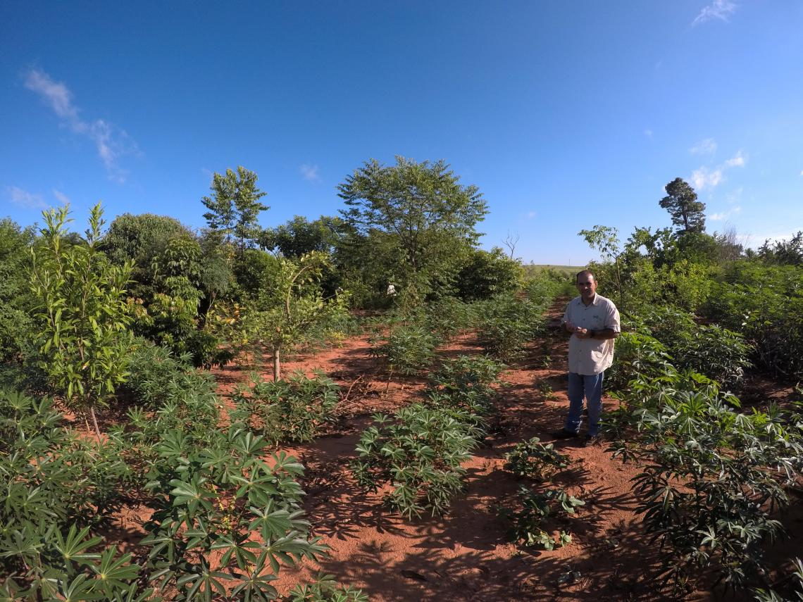 Buyer is advised that sale will require multiple signatures of all the benficiaries. Agroforestry A Pathway To Restore Brazil S Atlantic Forest Weforest