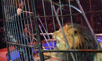 Proposal Banning Use Of Exotic Animals For Entertainment Moves Forward
