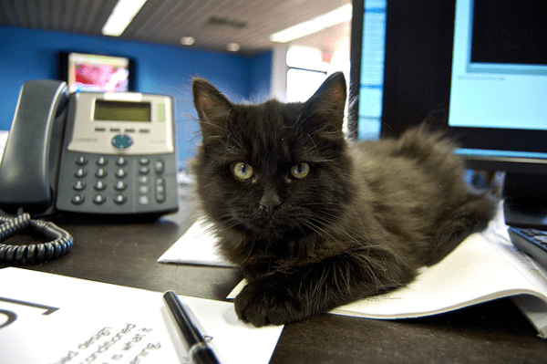 office-cat
