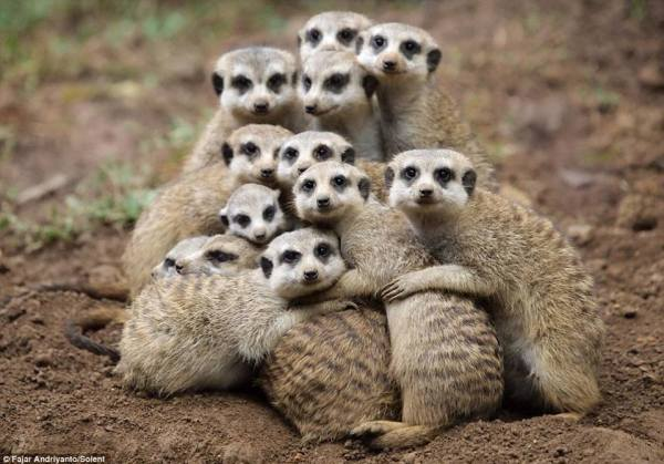 Everyone gets a hug (if they want one)