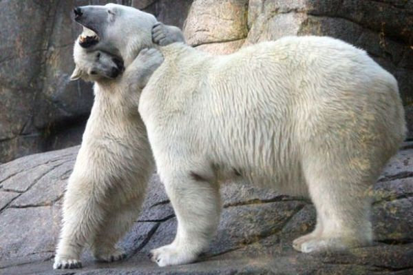 Literal bear hug!
