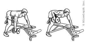 Image result for exercises for back