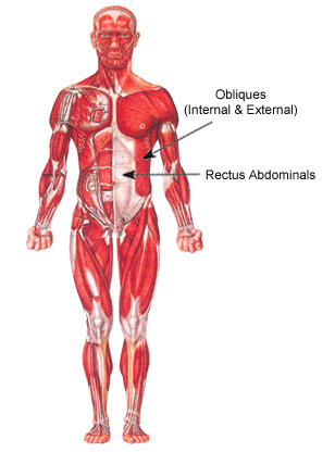 abdominal muscles diagram