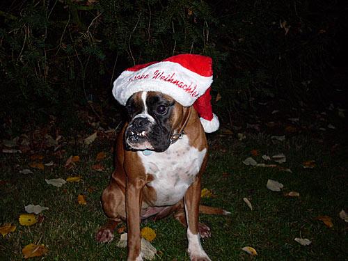 Weihnachten Hund