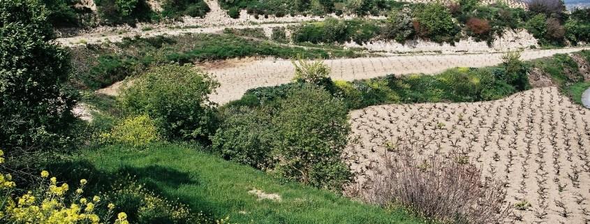 Zypern Wein - Weinheiten