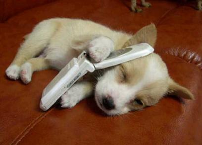 cell-phone-puppy.jpg