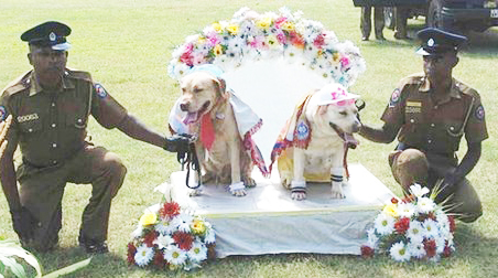 dogwedding1