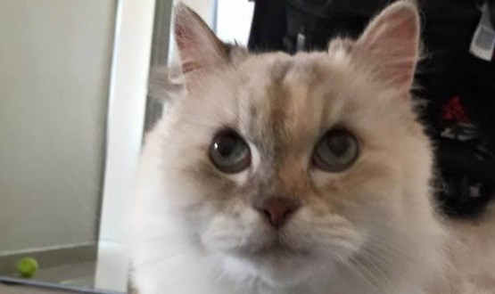 Brave Cat Survives 26-Story Fall