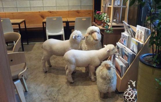 Visit Seoul's Sheep Cafe This Year of the Sheep